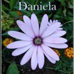 Leer El beso de Daniela – Clarisa Ozores (Online)